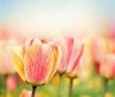 Testul primăverii: alege o floare şi vezi cum va fi primăvara ta