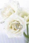 Buchete de mireasa trandafiri albi: cele mai frumoase