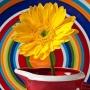 Cum alegi florile nuntii tale
