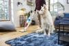 Super solutii de aspirare de la Rowenta pentru super curatenia de sarbatori