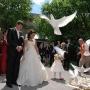 Se mai poarta porumbei la nunta?