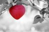 Zodiile cele mai norocoase in dragoste in luna noiembrie