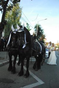 Trasura cu cai pentru nunta