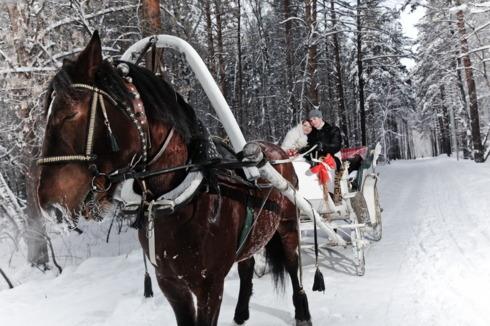 Mirii cu trasura cu cai