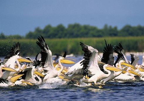 Destinatie turistica Delta Dunarii