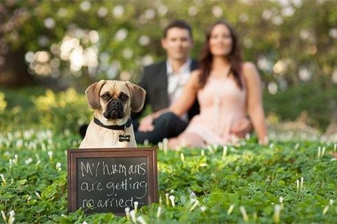 Fotografie de nunta cu animalul de companie