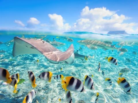 Peisaj subacvatic