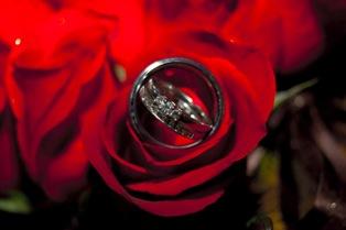 Poza trandafir rosu de nunta inel de nunta