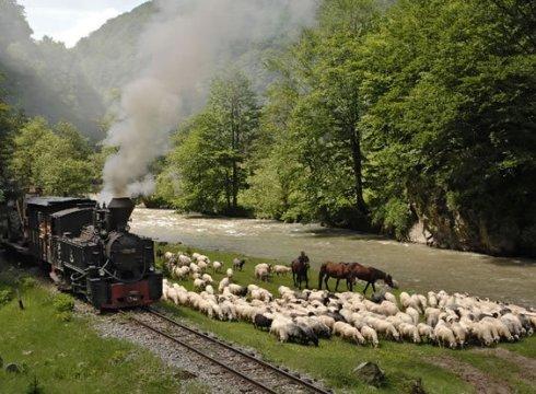Mocanita pe Valea Vaser