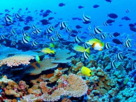 Marea Bariera de Corali, Australia